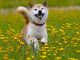 Shiba Inu looks to bounce after another dip